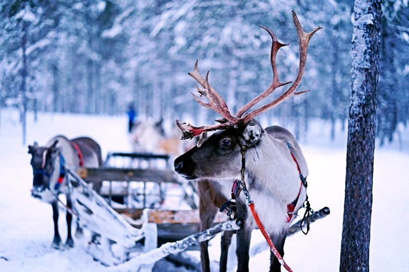 christmas verbs start p pulling sleigh